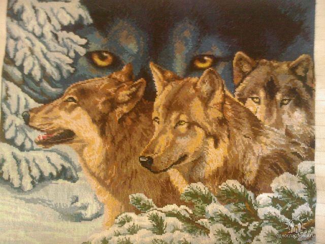 Волчий взгляд, оригинал