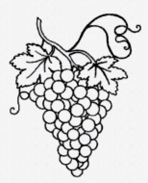 виноград рисунок: