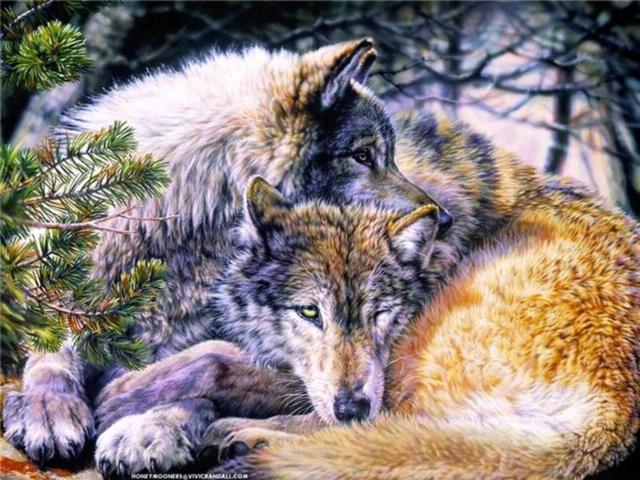 Пара влюблённых волков