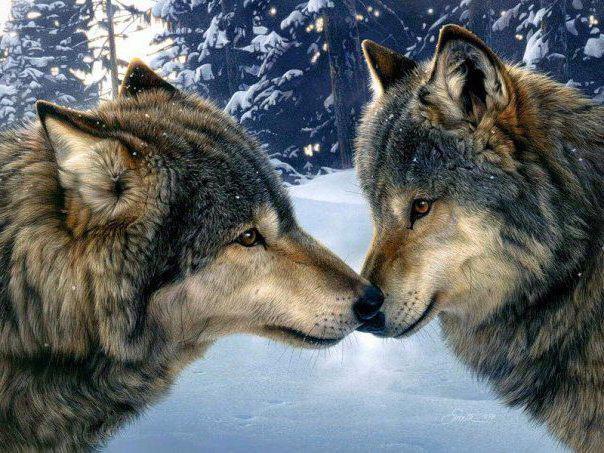 Волк и волчица, оригинал