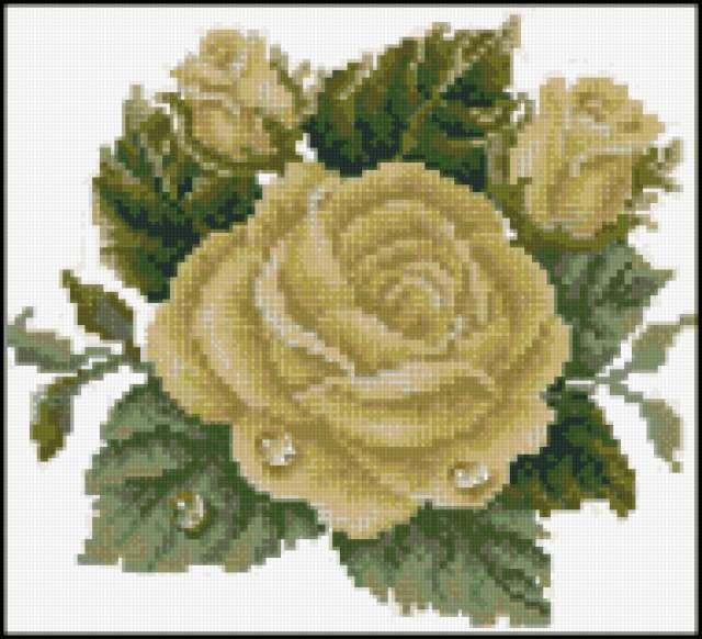 Белые розы, предпросмотр