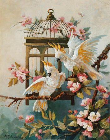 Белые попугаи, белые попугаи