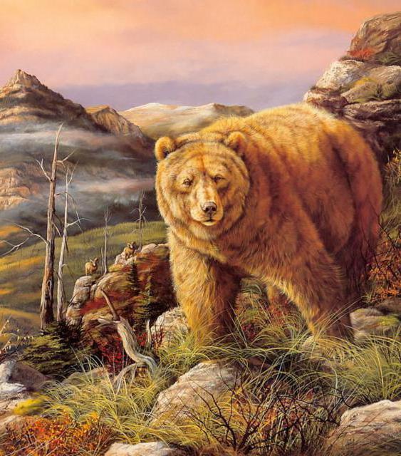 Бурый медведь, оригинал
