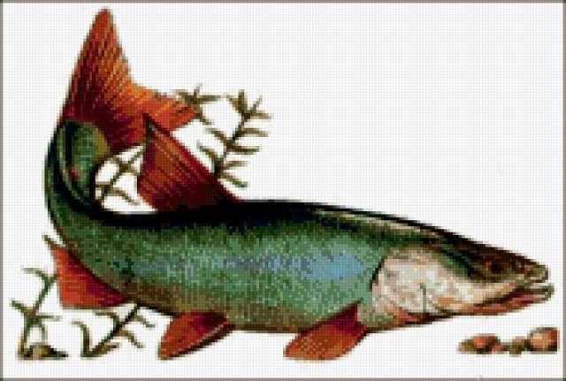 Рыба - лосось, предпросмотр