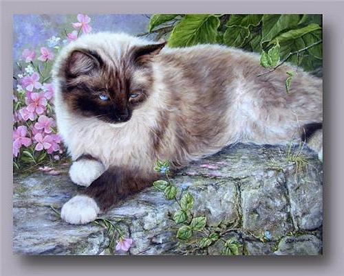 Сиамский кот, живопись