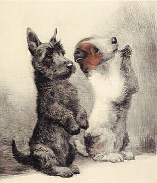 собака, щенок, скотч-