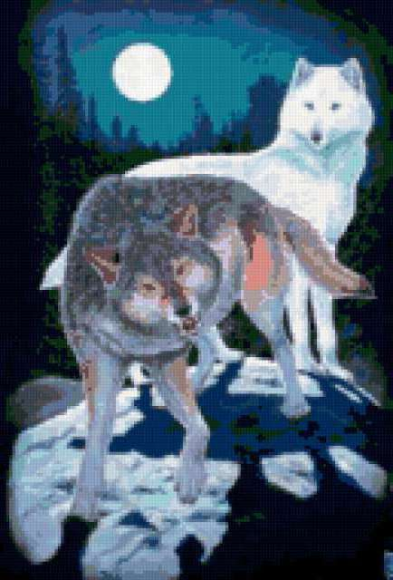 Волки в ночном лесу,