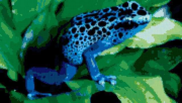 Синяя жаба, предпросмотр