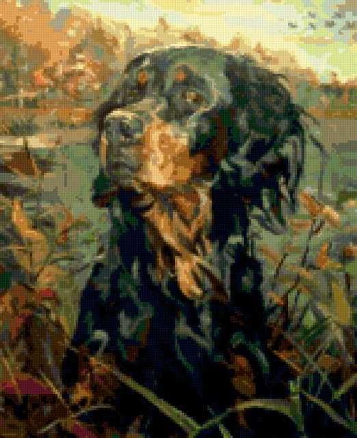 Охотничья собака, животные