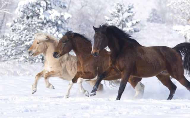 Тройка лошадей, тройка, лошади