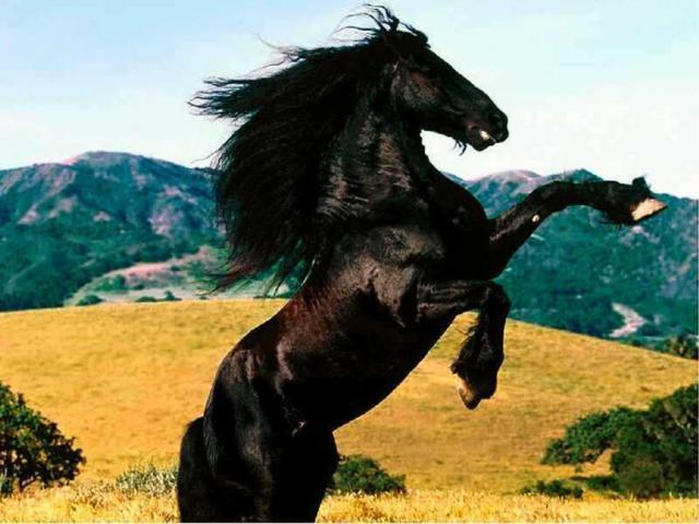 Конь - мустанг, оригинал