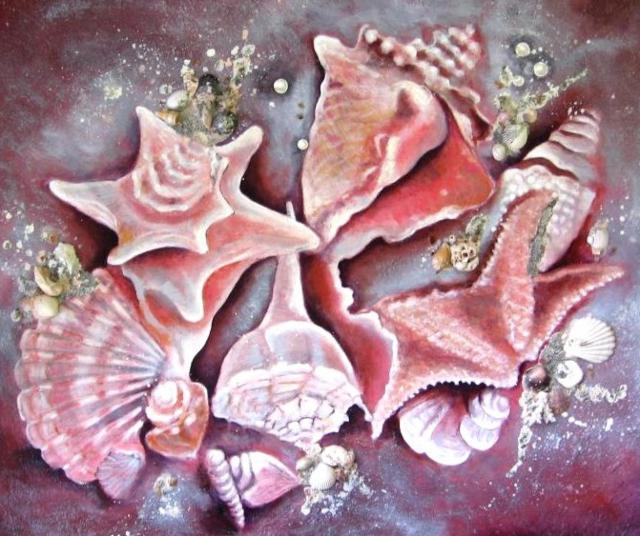 Морские ракушки, раковина