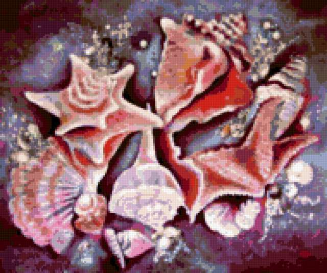 Морские ракушки, предпросмотр