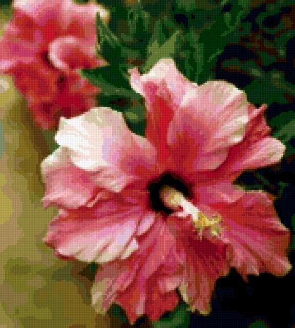 Розовый гибискус, предпросмотр