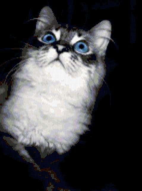 Голубые глаза, кошки
