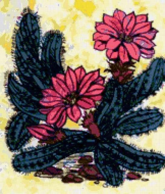 Цветущий кактус, предпросмотр