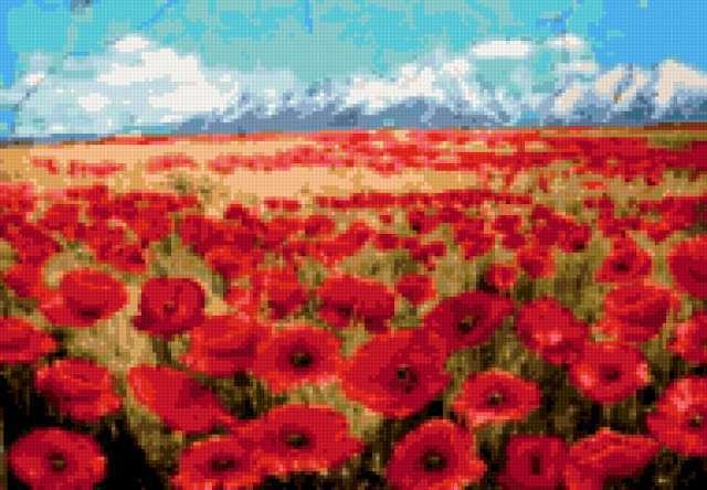 Маковое поле, живопись, цветы,