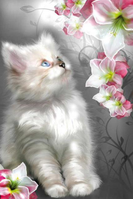 Белый кот, коты, белый, цветы