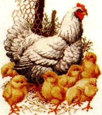 Наседка с цыплятами, наседка,