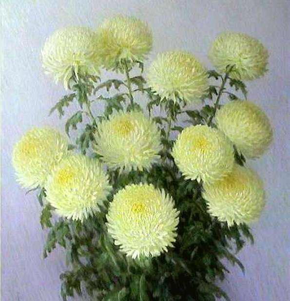 Букет хризантем, хризантемы