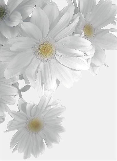 Цветы.Герберы., цветы, букет,