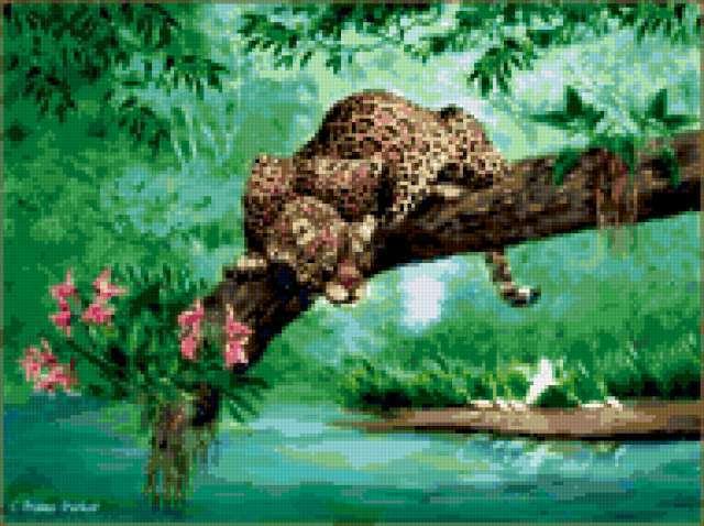 Гепард, охота, кошки