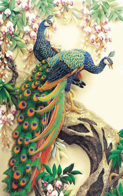 Павлины, птицы
