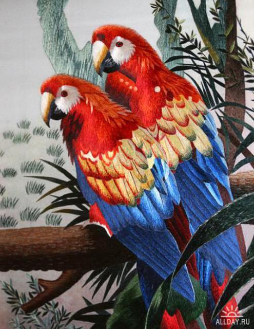 Попугаи ара,