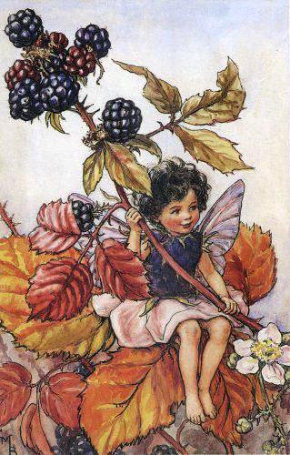 Маленький эльф и ягоды ежевики