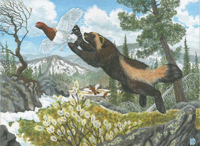 животные, хорьки, птицы,