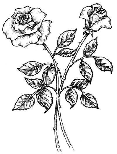 Чёрная роза, картинка