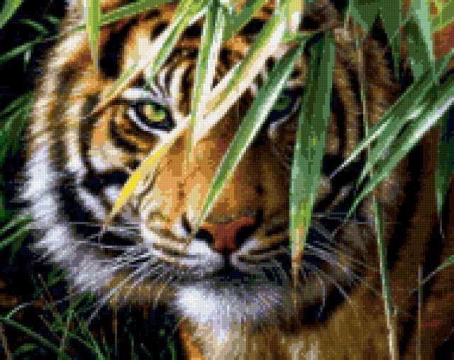 Тигриный взгляд среди листвы,