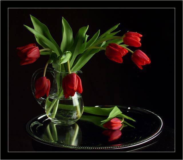 Красные тюльпаны на чёрном,