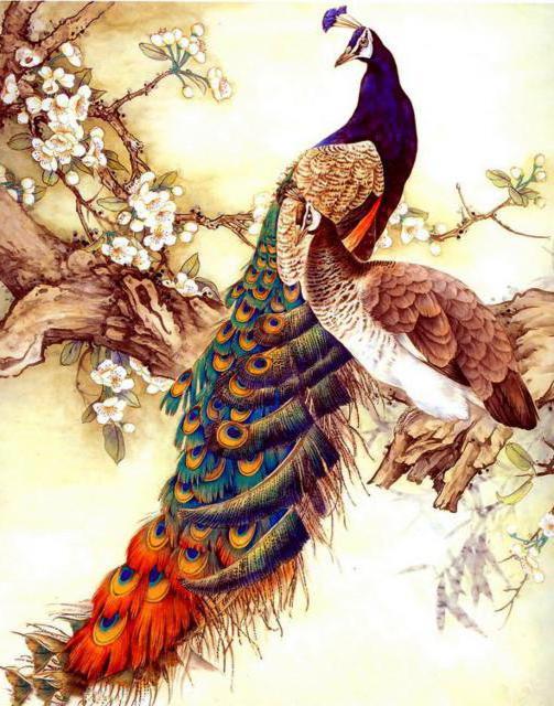 Жар-птица, птицы, тропики,
