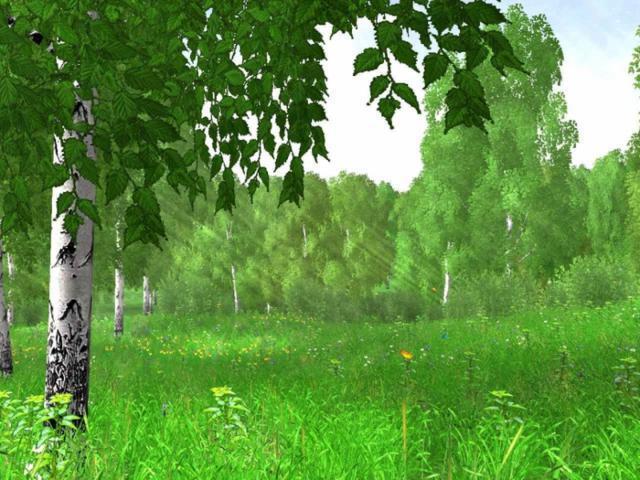 Берёзовая роща, пейзаж, берёзы