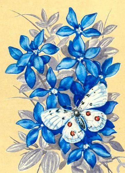 Голубые цветы и бабочка, цветы