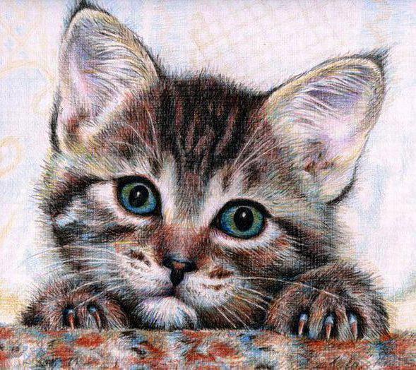 Портрет котёнка, животные