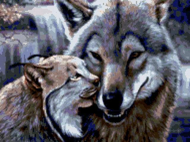 Рысь и волк - нежность,