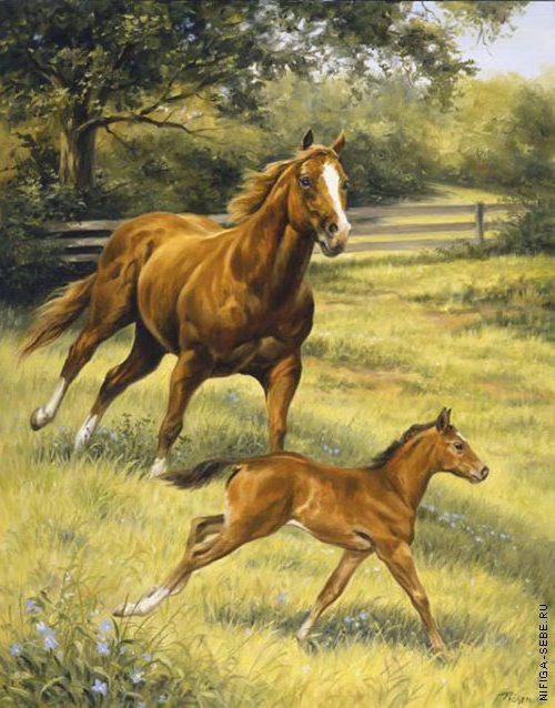 Лошади, лошадь, жеребенок