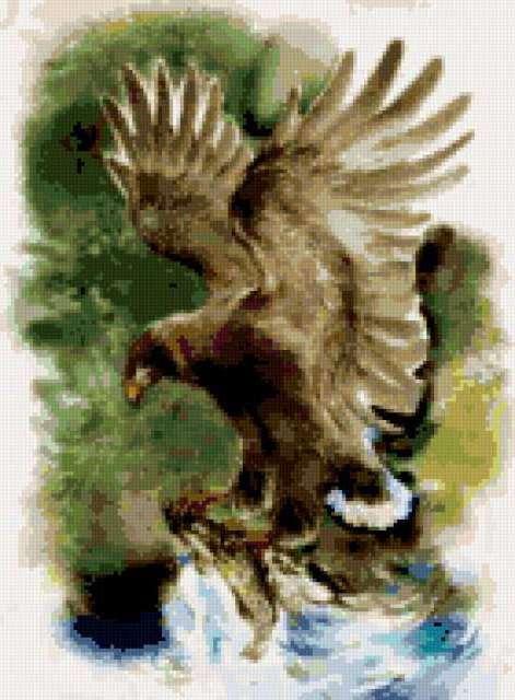 Орёл на рыбалке, предпросмотр