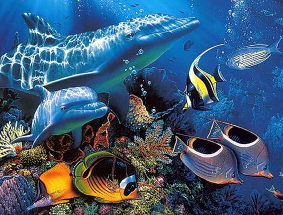 Дельфины в подводном мире,