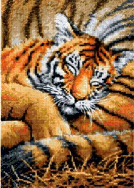 Сладкие сны, тигр, тигры,