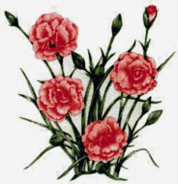 Цветы нежной гвоздики