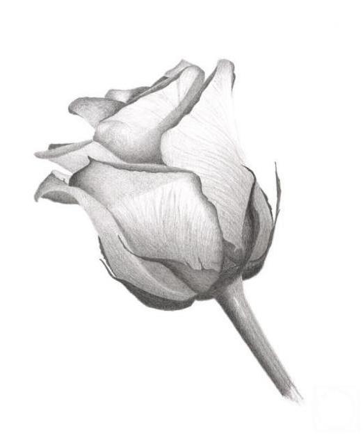Роза ч/б, оригинал