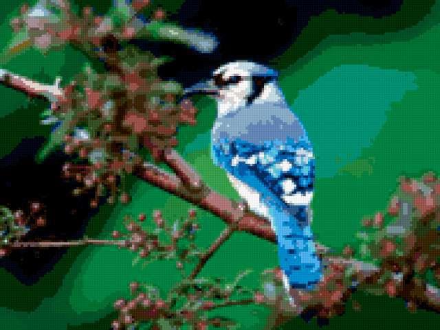 схеме вышивки. Синяя птица