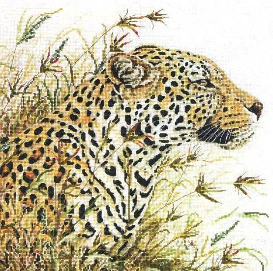 Ягуар в засаде, оригинал