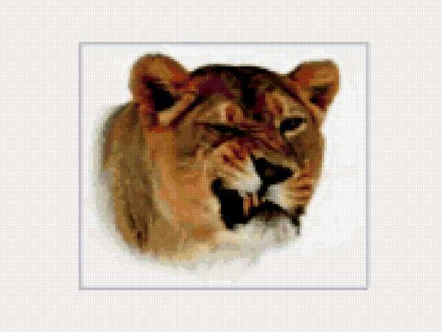 К схеме вышивки «Львица