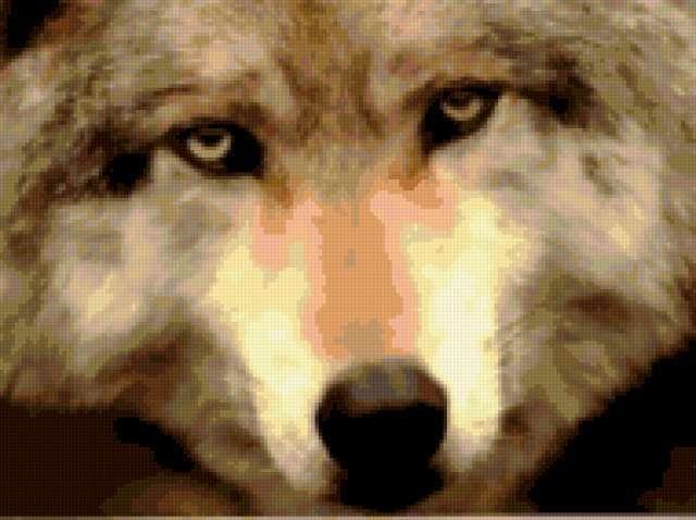 фото грустных волков