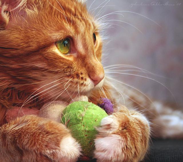 Рыжий кот с клубком, оригинал