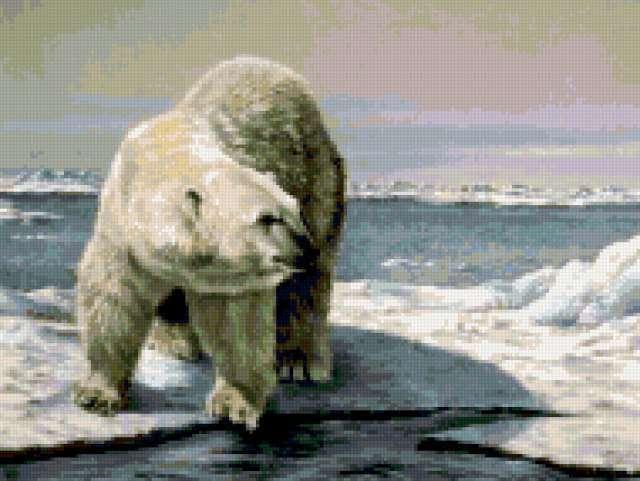 Белый медведь на льдине,